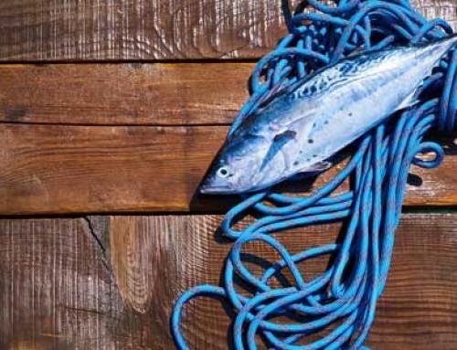 Ryby z plastiku