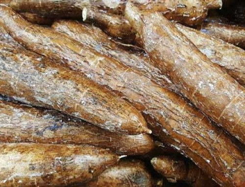 Maniok i termity