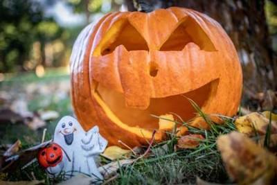 dynia helloween